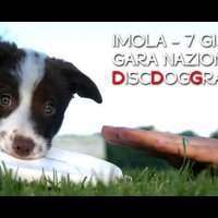 disc-dog-imola