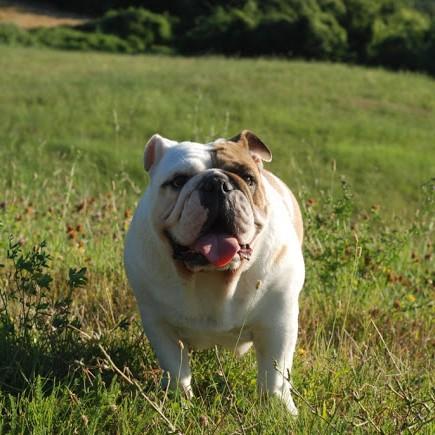 addestramento cani – discoli cinofilia bologna –altrementi