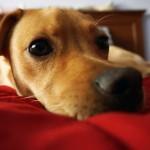 consulenza_adozione_cani