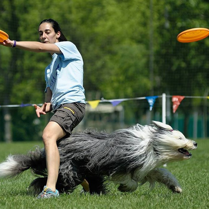 disc-dog-serena-degani