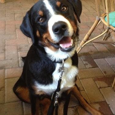 addestramento cani ozzano – discoli cinofilia bologna –altrementi