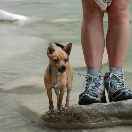 Corsi Addestramento Cuccioli